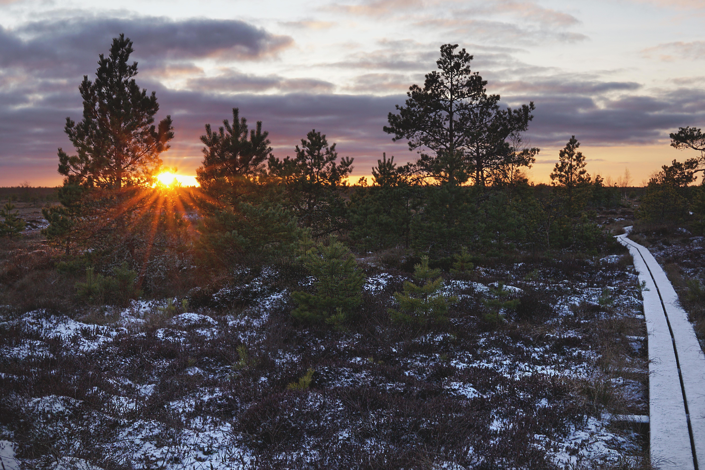 Tammsaare - Kodru raba - Järva-Madise matkarada
