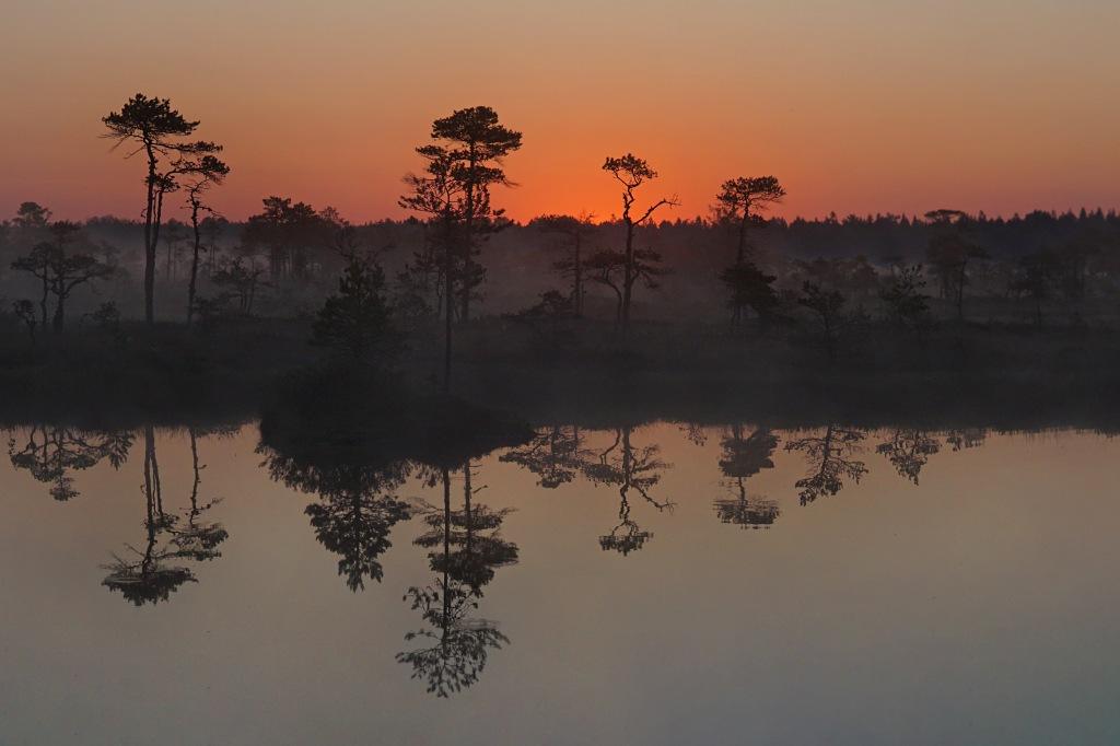Päikesetõus Hüpassaare rabas